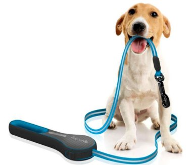 dog-take-leash